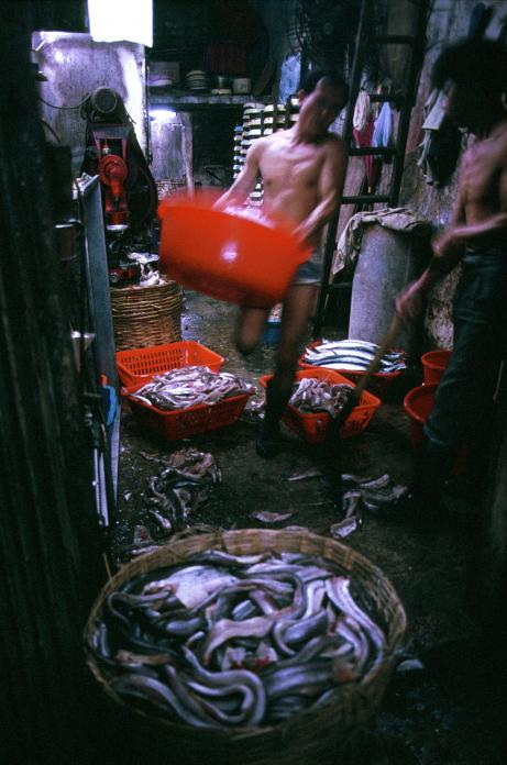 Fishball Factory, 1987